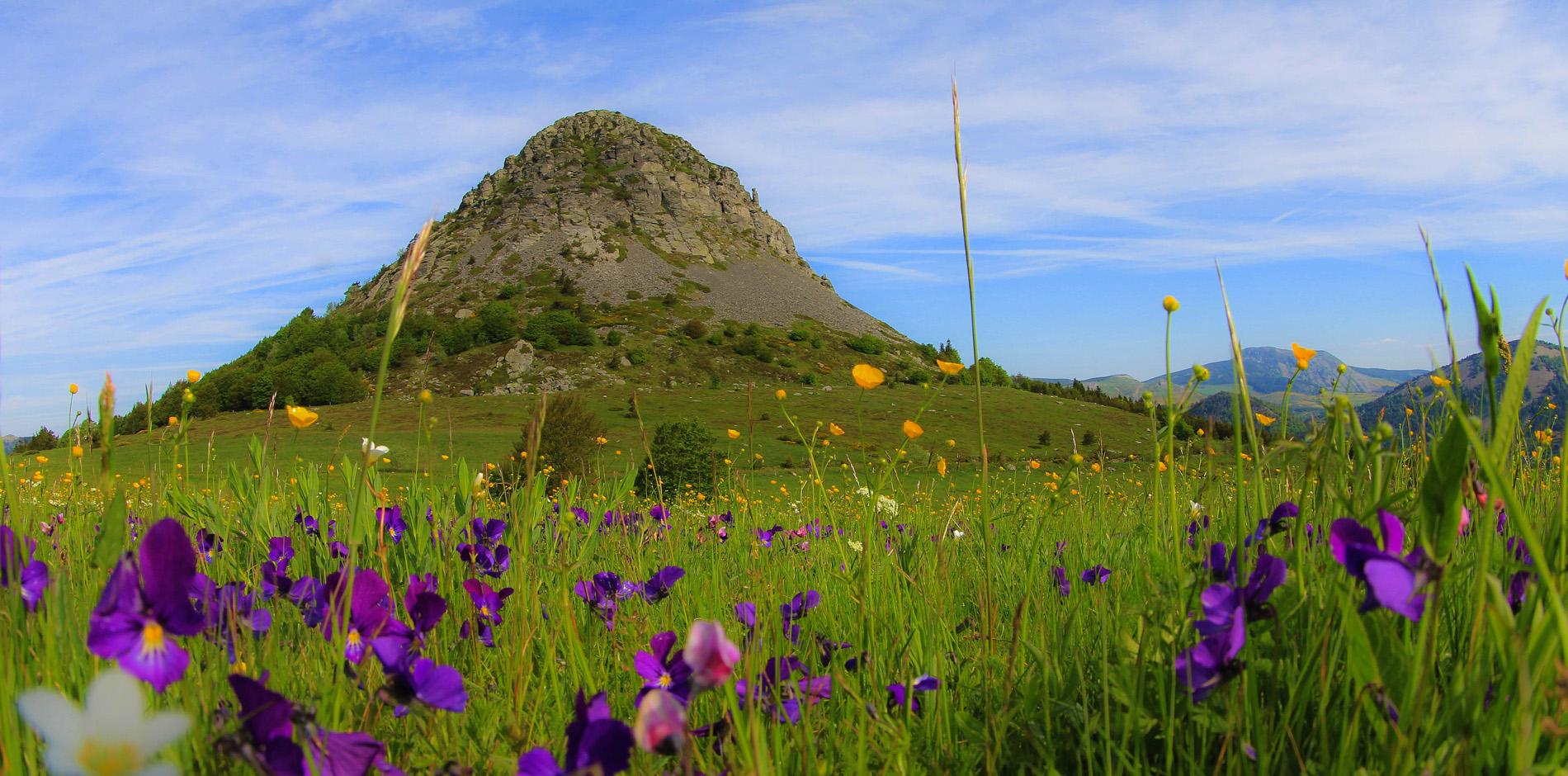 Printemps au Mont Gerbier de Jonc
